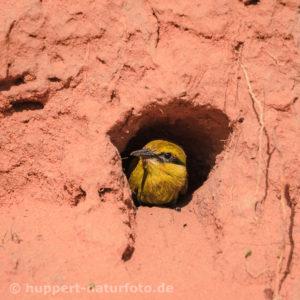 Schwalbenschwanzspint 4, Südafrika