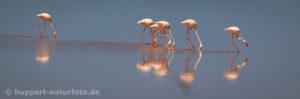 Flamingo 3, Namibia