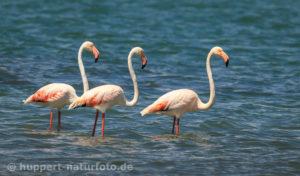 Flamingo 1, Namibia