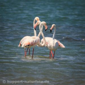 Flamingo 2, Namibia